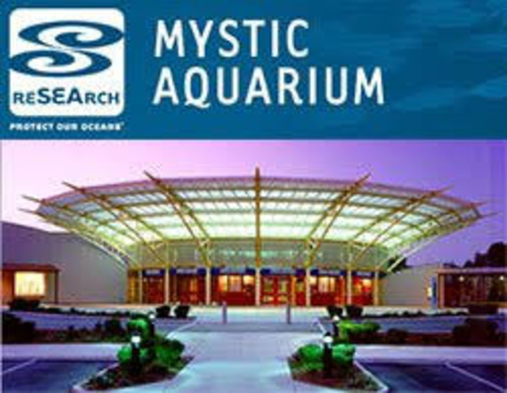 mystic aquarium virtual tour